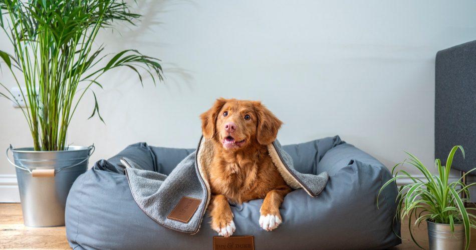 Tips voor de juiste hondenmand van je hond