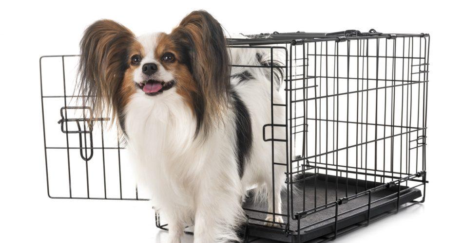 Juiste hondenbench voor je hond