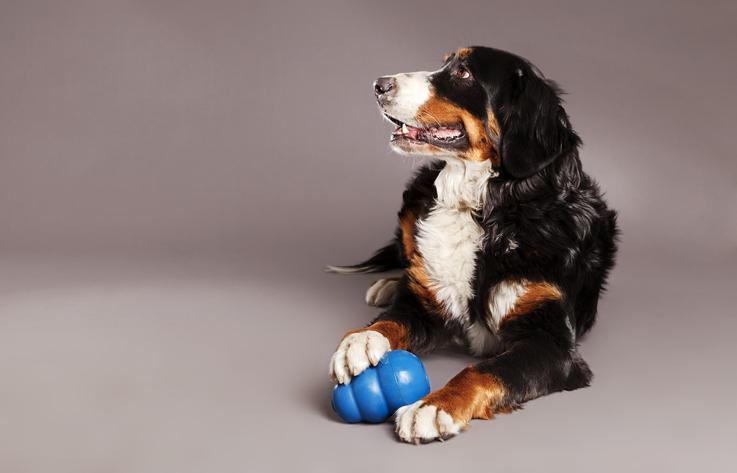 Welke kong voor welke hond in het blauw